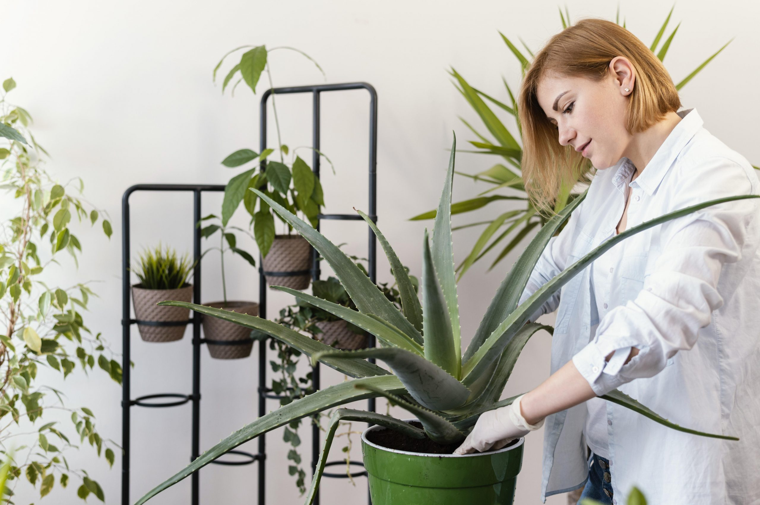 Kapasitas besar tempat susun tanaman lebih memiliki segudang manfaat