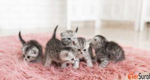 Perlu diperhatikan cara merawat kucing kecil yang tepat dan baik