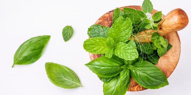 kumpulan tanaman herbal