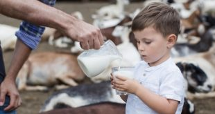 manfaat kambing dan cara ternak