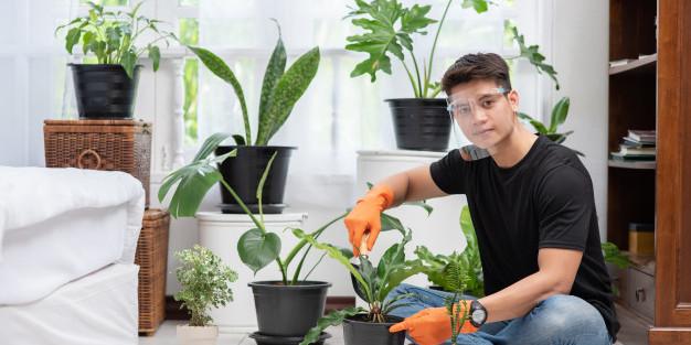 koleksi tanaman hias