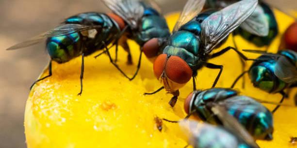 pengaruh serangga terhadap manusia & lingkungan